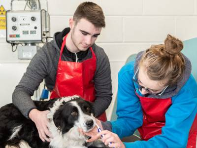 Introduction To Animal First Aid: Level 4